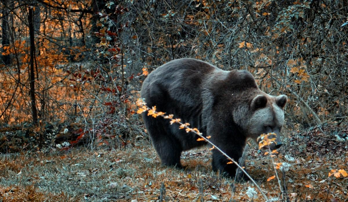 Ein Bär im Hellabrunn. Ein Bär im Hellabrunn. Ein Bär im Hellabrunn. Ein Bär im Hellabrunn. Ein Bär im Hellabrunn. Ein Bär im Hellabrunn.